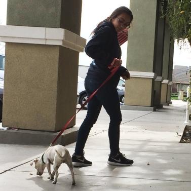 A girl walking a dog