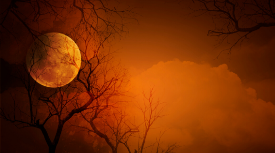 Halloween photo of a moon and trees without leaves